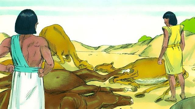 Cinquième-fléau-l'épidémie-parmi-le-bétail